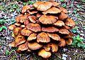 Mushrooms in Middletown.jpg