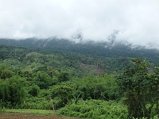 Northern Triangle subtropical forests