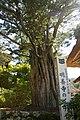 Myozenji Ogi Shirakawa17s3.jpg
