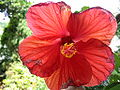 N2 Hibiscus.jpg