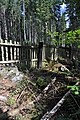 NPR Boubínský prales 20120910 28.jpg