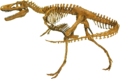 Nanotyrannus Clean.png