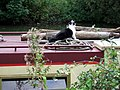 Narrowboat cat 2, Oxford canal - geograph.org.uk - 435506.jpg