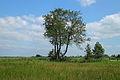 Nationaal Park Weerribben-Wieden. Bomengroep 02.JPG