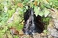 National Botanic Garden,Dublin,Ireland - panoramio (8).jpg