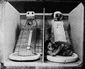 Maternal deprivation - Wikipedia
