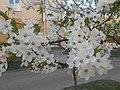 Nature in Smolensk - 26.jpg