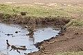 Nature of Ngorongoro Conservation Area (105).jpg