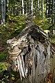 Nature reserve Ptaci stena in autumn 2011 (9).JPG