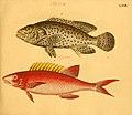 Naturgeschichte in Bildern mit erläuterndem Text (Taf. LXXIV) (6058669571).jpg