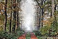 Nebeltag1 - Sascha Grosser -waldweg x1 f1024 hdr collyx22e.jpg
