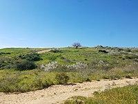 Ness Ziona Hills.jpg