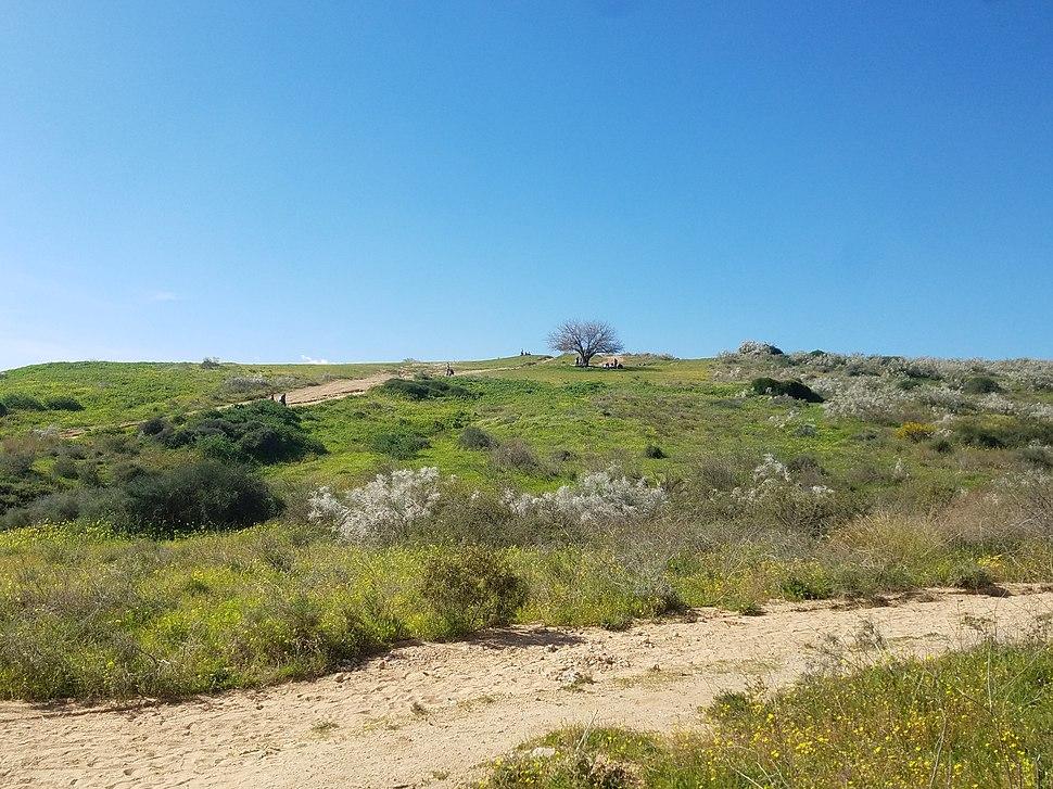 Ness Ziona Hills