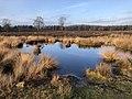 Netherlands, Veluwe (5), Heerde, Renderklippen, Wollegrasven.jpg