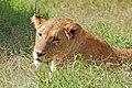 Ngorongoro 2012 05 30 2595 (7500981540).jpg