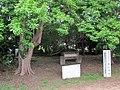 Noda Shell Mound.jpg