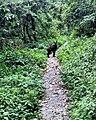 North Dawu Mountain - Goat.jpg