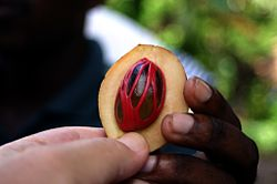 Mace within nutmeg fruit