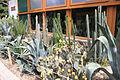 Nyíregyháza Zoo, succulents-2.jpg