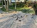Oiseaux Parc Hôtel Ville Fontenay Bois 8.jpg