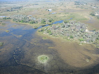 Okavango Delta - Typical region in the Okavango Delta, with free canals and lakes, swamps and islands