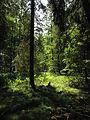 Olšina v Novolhotském lese (009).jpg
