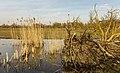 Ontwortelde boom bij vogelkijkhut De Krakeend. Locatie, Oostvaardersplassen 03.jpg