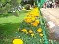 Ooty Botanical garden02.JPG