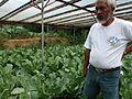 Organic farming in the Philippines - 2 (10711787145).jpg