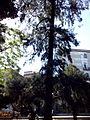 Orto botanico di Napoli 80.jpg