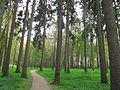 Ostafyevo Pine grove.JPG