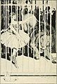 Overheard in a garden (1900) (14768911302).jpg