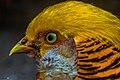 Pássaro do Rio Grande do Sul.jpg