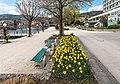 Pörtschach Johannes-Brahms-Promenade Blumenstrand Narzissenbeet 11042020 8703.jpg