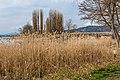 Pörtschach Promenadenbad Schilfrohr Brücke und Blumeninsel 09042019 6409.jpg