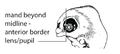 P5. Mandibular arch bud anterior lens (G02e).png