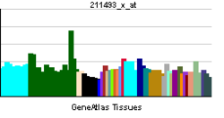 PBB GE DTNA 211493 x at tn.png