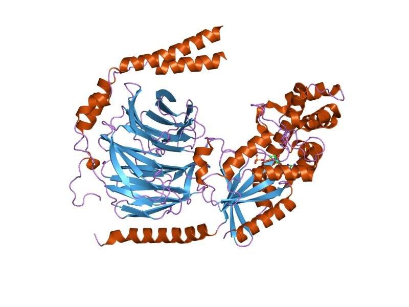 PDB 1gp2 EBI