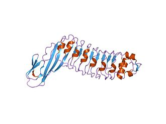 Leucine-rich repeat - internalin h: crystal structure of fused n-terminal domains.