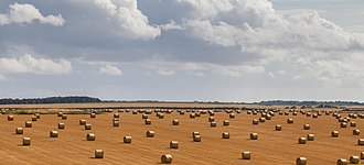 Straw - Field full of straw bales in Wiltshire, England