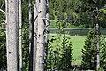 Pair with bears Yellowstone-20190613.jpg