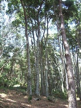 Paisaje. Tipo de vegetación en las Islas Cíes (Galicia).jpg