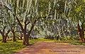 Pakenham Oaks Postcard Curtich.jpg