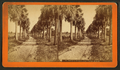Palmetto Avenue, Fort George Island, from Robert N. Dennis collection of stereoscopic views.png