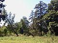 Park dworski Czachórskich (11).jpg
