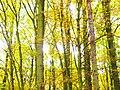 Park views in autumn (Netherlands 2011) (6311404125).jpg