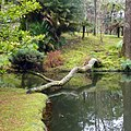 Parque Terra Nostra, Furnas, S. Miguel, Açores,Portugal - panoramio (4).jpg