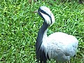 Parque das aves em foz.jpg