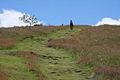 Path to Salisbury Crags - geograph.org.uk - 896904.jpg