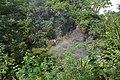 Perspektiven des Parque nacional Iguazú 25 (22125947391).jpg